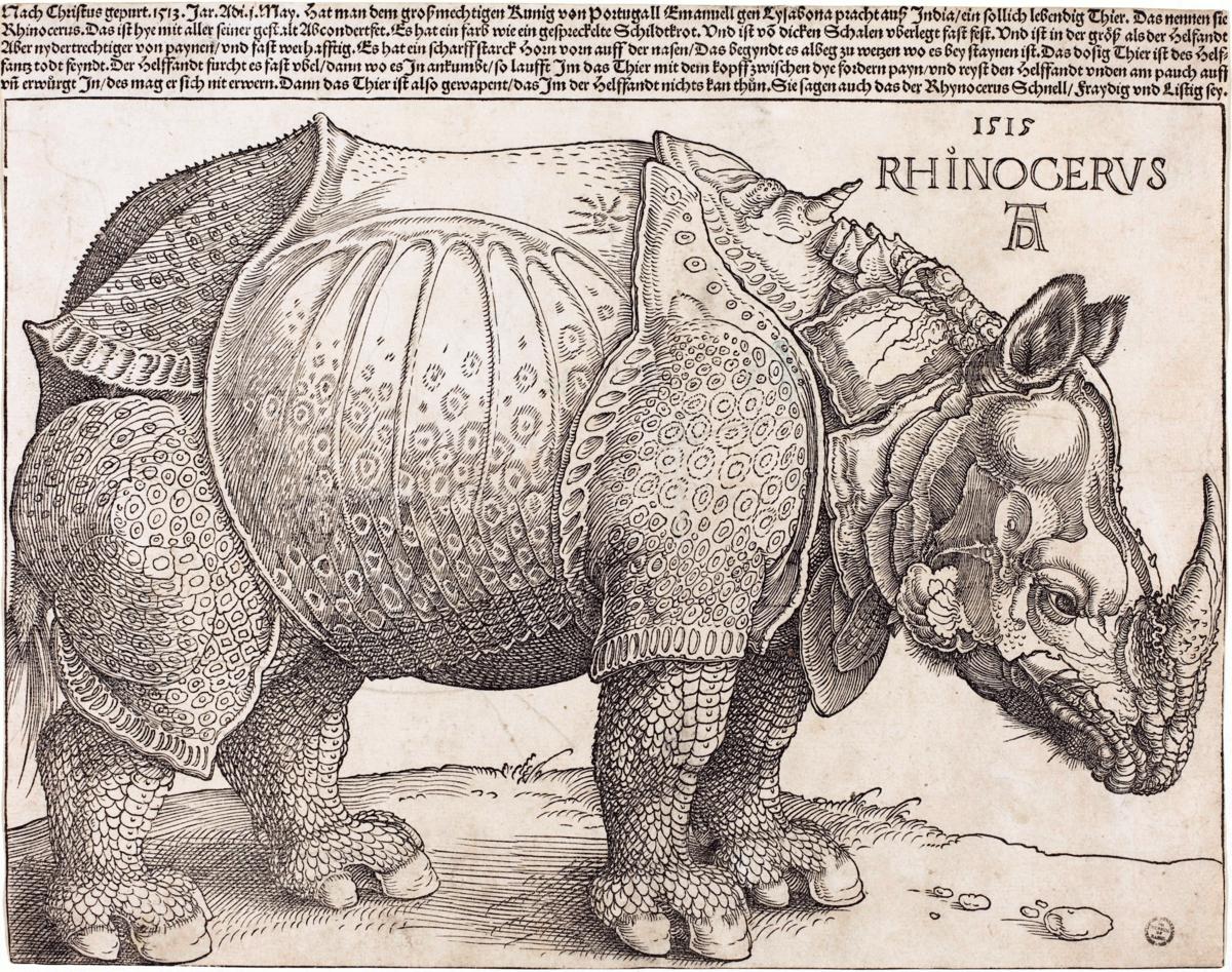 Drawing Lines In Rhino : Dürer s rhinoceros wikipedia
