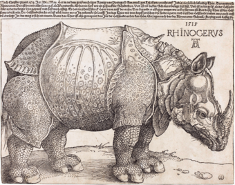 The Rhinoceros (NGA 1964.8.697) enhanced.png