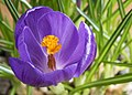 The beauty of spring (32993737438).jpg