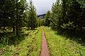 The trail through Echo Valley Yosemite.jpg