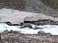 The water flowing from himalayas.jpg