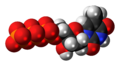 Thymidine triphosphate anion 3D spacefill.png