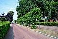 Tilia × europaea, Garderen, Mazenhofstraat (03).jpg