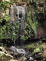 Timborine National Park (Curtis Falls 03).jpg