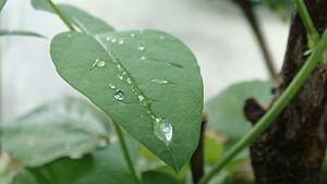 Bahasa Melayu: Titisan air hujan di atas permu...