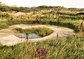 Toad Pond, Hengistbury Head - geograph.org.uk - 1444668.jpg