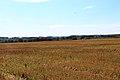 Toguchinsky District, Novosibirsk Oblast, Russia - panoramio (6).jpg