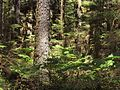 Tongass National Forest 537.jpg