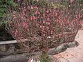 Trấn Quốc Pagoda6.JPG