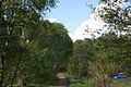 Track through Queen Oak Plantation - geograph.org.uk - 1330841.jpg