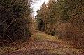 Track through York's Wood - geograph.org.uk - 1733010.jpg