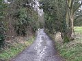Track to the lake - geograph.org.uk - 721414.jpg