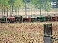 Tractors, tractors and more tractors 2.jpg