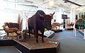 Transvaal Museum-023.jpg