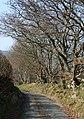 Tree-lined lane - geograph.org.uk - 387373.jpg