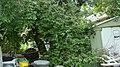 Tree Mess 1 (8195009603).jpg