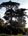Trees in Golden Gate Park (3617487601).jpg