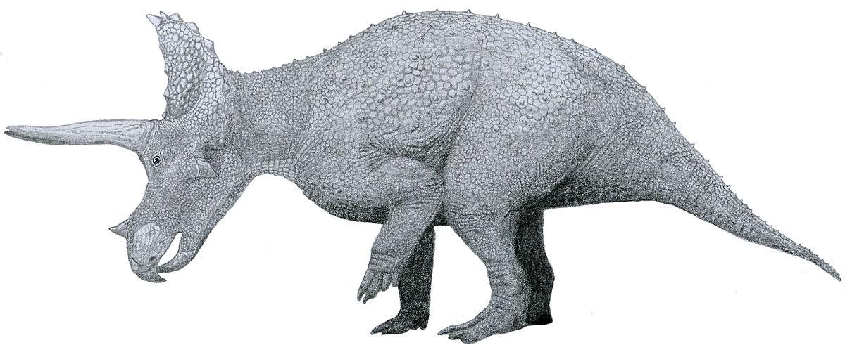 Triceratops by Tom Patker-01.jpg