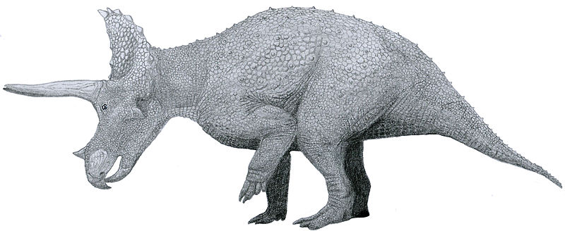 File:Triceratops by Tom Patker-01.jpg