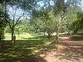 Trilhas do Parque do Ibirapuera.jpg