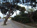 Triq Il-Mosta, Ħal Lija, Malta - panoramio (53).jpg