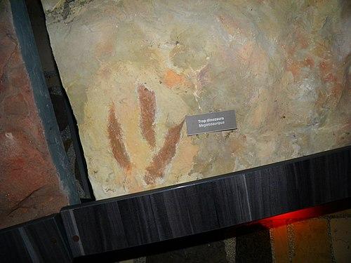 Trop dinozaura ze zbiorów muzeum przyrodniczego na świętym krzyżu.jpg