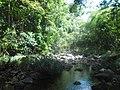 Tropska prašuma, Kambodža.jpg