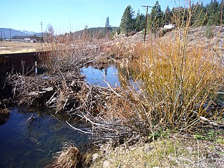 Trout Creek (Truckee River tributary) river in California, United States of America