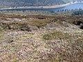 Upper Derwent Valley above Birchinlee - geograph.org.uk - 1260907.jpg
