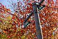 Utility poles in Finland 02.jpg