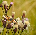 Växter Plants (23323074111).jpg