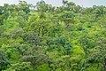 Végétation de la chaine d'Atacora.jpg