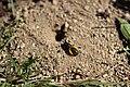 Včely samotářky (02).jpg