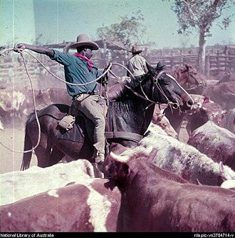 Stockman (Australia) - Indigenous Australian stockman at Victoria River Downs Station
