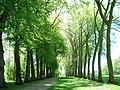 Vaux le Vicomte (1343424700).jpg