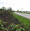 View along the A1101 - geograph.org.uk - 1261445.jpg