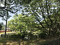 View of Iris Pond of Kashii Shrine.jpg
