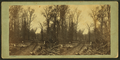 View of road through the woods, by Martin's Art Gallery.png
