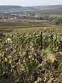 Vignes (Coteaux de Festigny.51) Cl.J.Weber01 (23050620643).jpg