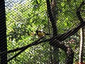 Viveiro de pássaros no Zoológico de Catanduva - panoramio.jpg
