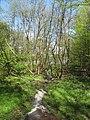 Vyžlovský rybník (035).jpg