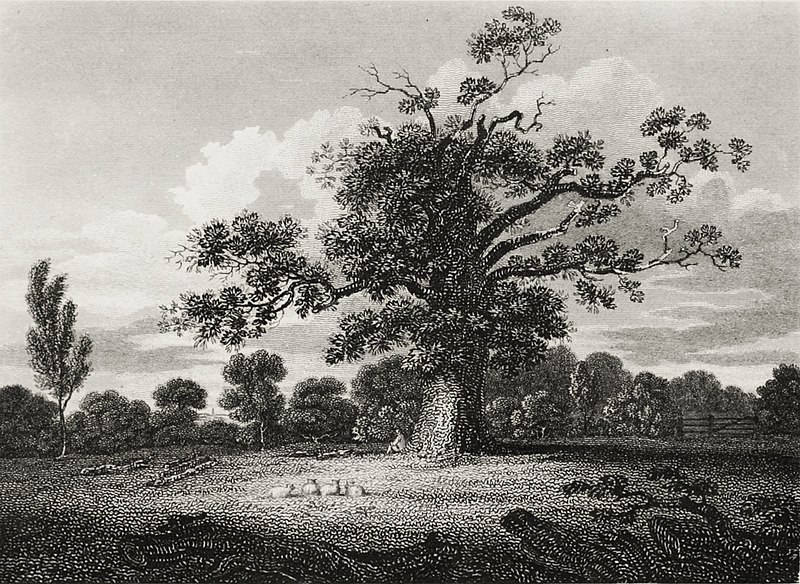 File:Wake's Oak.jpg