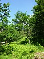 Waldreservat Plontabuora6.jpg