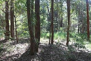 Wallumatta Nature Reserve Protected area in New South Wales, Australia