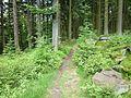 Wanderweg bei Riedelswald.jpg