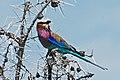 Western Serengeti 2012 06 02 3993 (7557768008).jpg