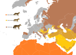 Wolf-like canids of the Mediterranean range map.PNG