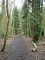 Woodland footpath on Cottagers Hill - geograph.org.uk - 737834.jpg