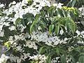 Wzwz tree 01b.jpg