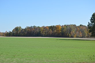 Winter wheat - Winter wheat with fall colors in the eastern United States